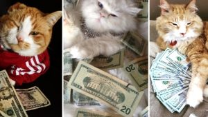 Galeri: Milyonerleri kıskandıran zengin kediler