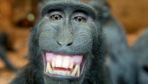 Hayvanların da insan edasıyla gülümsediğini biliyor muydunuz?