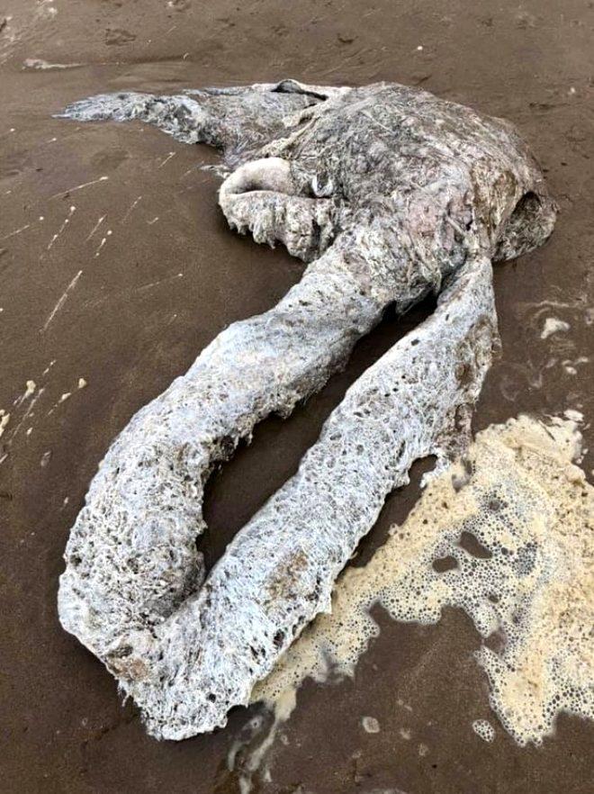 Plajdaki yaratık korku saldı! Kimse ne olduğunu anlayamadı