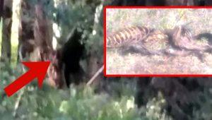 Ormandaki gizemli yaratık kasaba halkına korku salıyor! Yarı insan yarı köpek