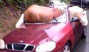 Araba kazası şoke etti! At arabanın ön camından içeri girdi