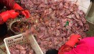 Koala, yılan, kedi ne bulsalar yiyorlar! İşte katil hastalık koronavirüsün yayıldığı pazardan kareler