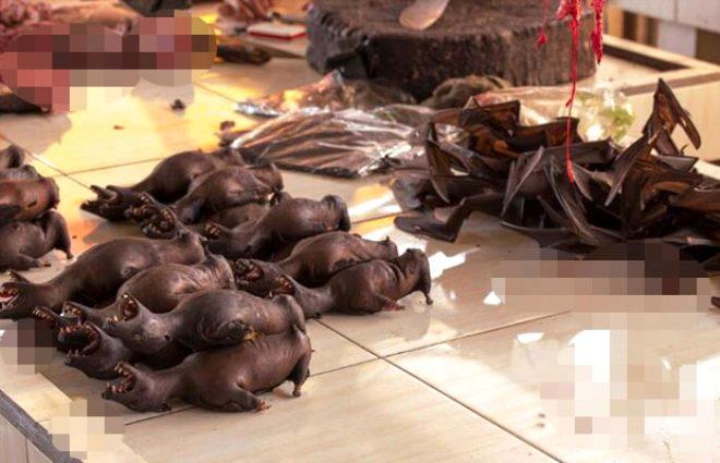 Bu kez Çin değil! Vahşi hayvanların canlı canlı kaynatıldığı Tomohon Pazarı'nda koronavirüs riski