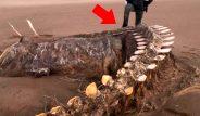 İskoçya'da Ciara fırtınasından sonra karaya vuran devasa iskelet görenleri hayretler içinde bıraktı