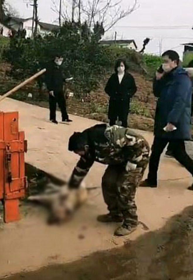 Ölümcül virüsle savaşan Çin'de evcil hayvanlar gasp edilip öldürüldü