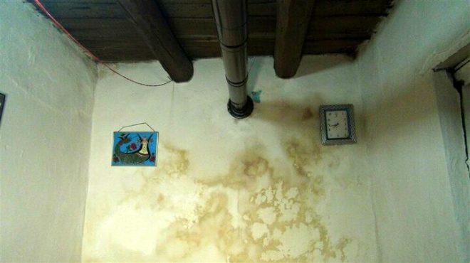 Kars'ta 4 ayrı evde art arda görülen akrep vatandaşı korkuttu!