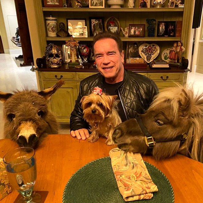Efsane oyuncu Arnold Schwarzenegger eşeğini ofise getirdi