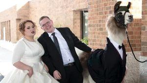 Böyle düğün sürprizi görülmedi! Kız kardeşinin düğününü lama ile bastı!