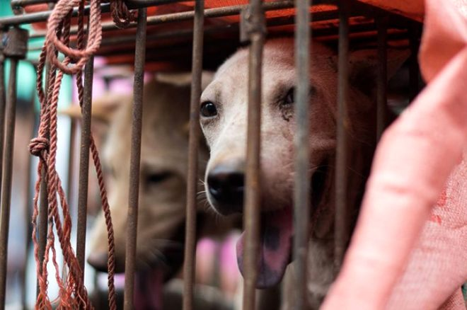 Çinli yemek şirketinden iğrenç protesto! Vatandaşları köpek eti yemeye çağırdı