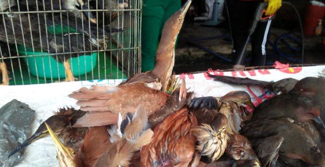 Koronavirüsün kaynağı olan Çin pazarında korkutan hareketlilik! Vahşi hayvanları canlı canlı pişirip satmaya devam ediyorlar