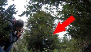 Yolunu kaybeden fotoğrafçılar tarafından bulunan 2 bin 500 yıllık ağaç ihtişamıyla büyüledi