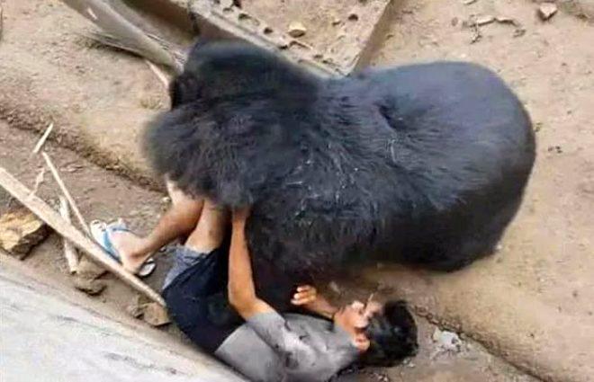 İnanılmaz anlar! 36 yaşındaki turist ayıyla şakalaşmanın bedelini ağır ödedi