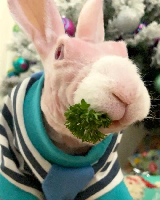 Karşınızda fenomen tavşan Mr. Bigglesworth