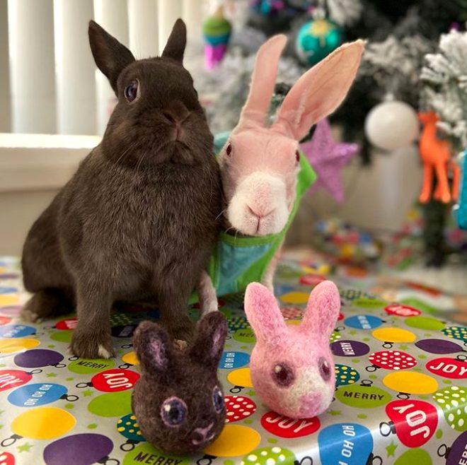 Avustralyalı hayvansever, hayran kaldığı tüysüz tavşanı kurtarıp fenomen yaptı