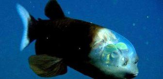 Bu deniz canlısını anlamak için bir defa bakmak yetmiyor! Denizin derinliklerinde yaşayan 7 şaşırtıcı hayvan
