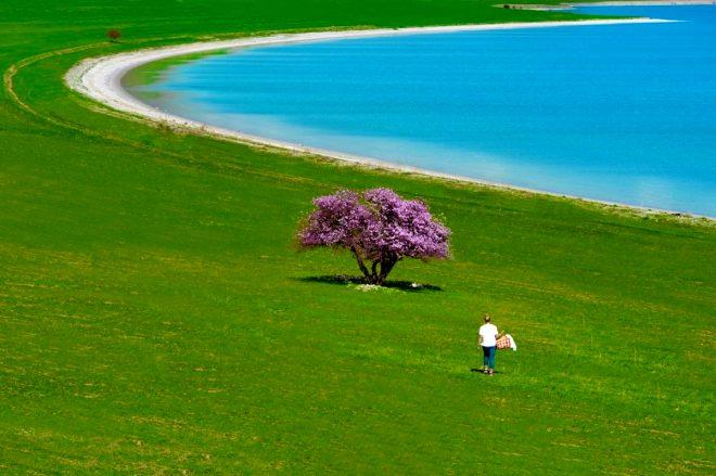 İsviçre Alp'leri değil Van! Çarpanak Adası'nın eşsiz güzelliği görenleri hayran bırakıyor
