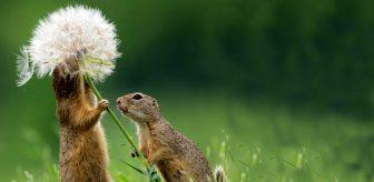 Bu fotoğrafı çekmek için 3 gün bekledi! Doğanın haylazlarının çiçeklere olan tutkusu paylaşım rekorları kırdı