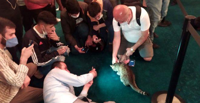 Ayasofya'nın dünyaca ünlü kedisi 'Gli' ziyaretçilerden yoğun ilgi görüyor