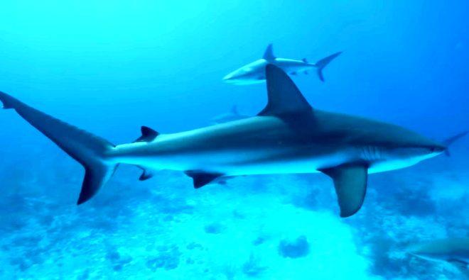 YouTuber Mark Rober'ın çılgın deneyi yürekleri ağızlara getirdi! Okyanusa kan döküp köpekbalıklarının arasına daldı