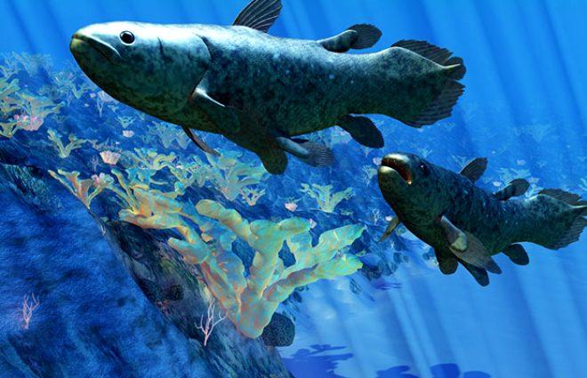 3-Coelacanth! Coelacanth nedir?