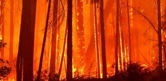 Amerikalılar ne yapacağını şaşırdı! Yazın ortasında yağan kardan sonra bitmeyen yangınlar kabusları oldu
