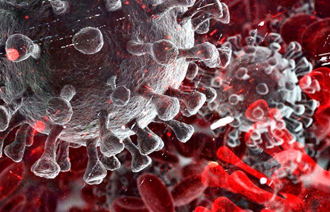 Cistus Creticus bitkisi koronavirüsten koruyor! 10 dakikalık temas, ölümcül virüsü etkisiz hale getirmek için yetiyor