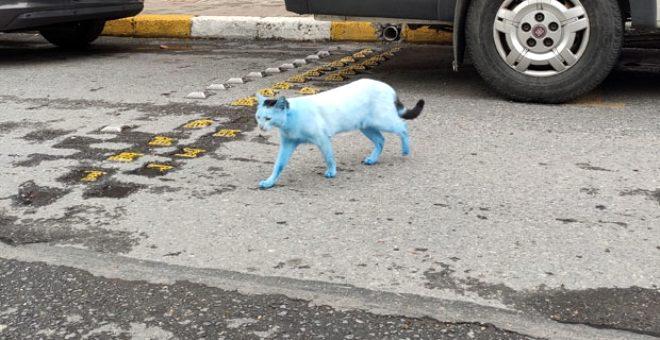 Sorumsuzca davrananların eseri! İstanbul'un bir ilçesinde kediler 'Şirinler'e döndü
