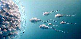 Son araştırma erkekleri derinden üzecek! Koronavirüsün testislerde uzun süre kalabildiği ortaya çıktı