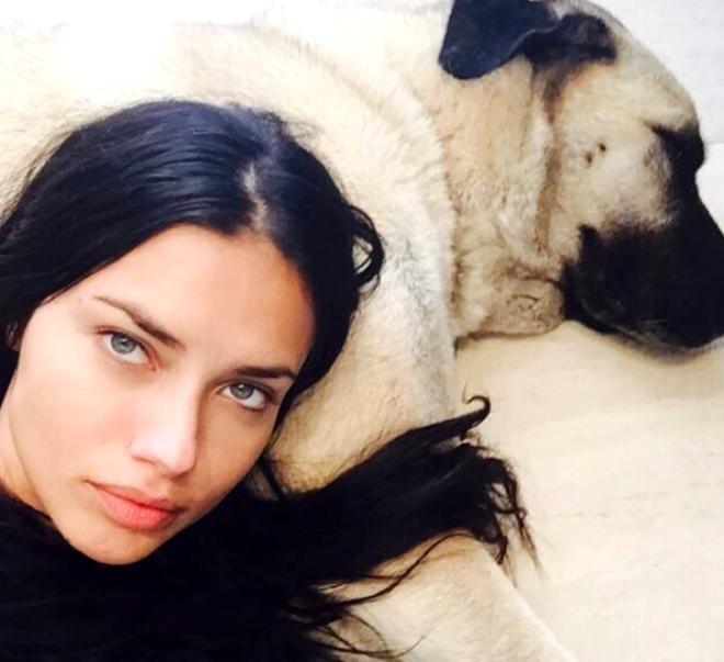 Sivaslılar'dan kangal sayısını ikiye çıkaran Adriana Lima'ya çağrı: Üçüncüsü bizden olsun