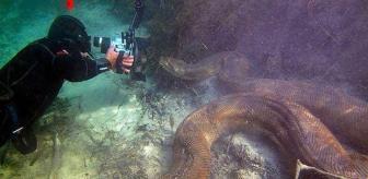 Nehre dalış yapan fotoğrafçı burun buruna geldi! Tam 7 metre uzunluğunda, 90 kilo ağırlığında