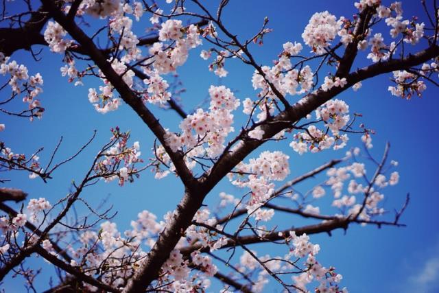 Hoş geldin nisan - Umutlarla gelen bahar