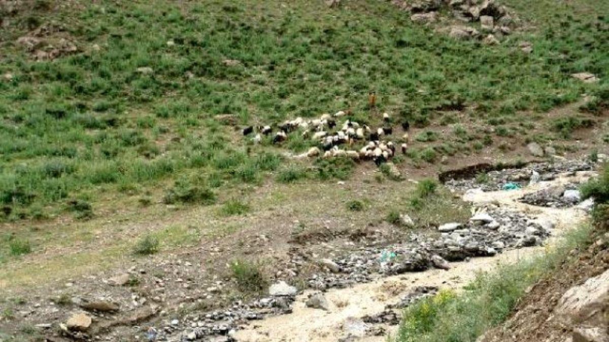 Yüksekova'da Sele Kapılan 800 Koyun Telef Oldu