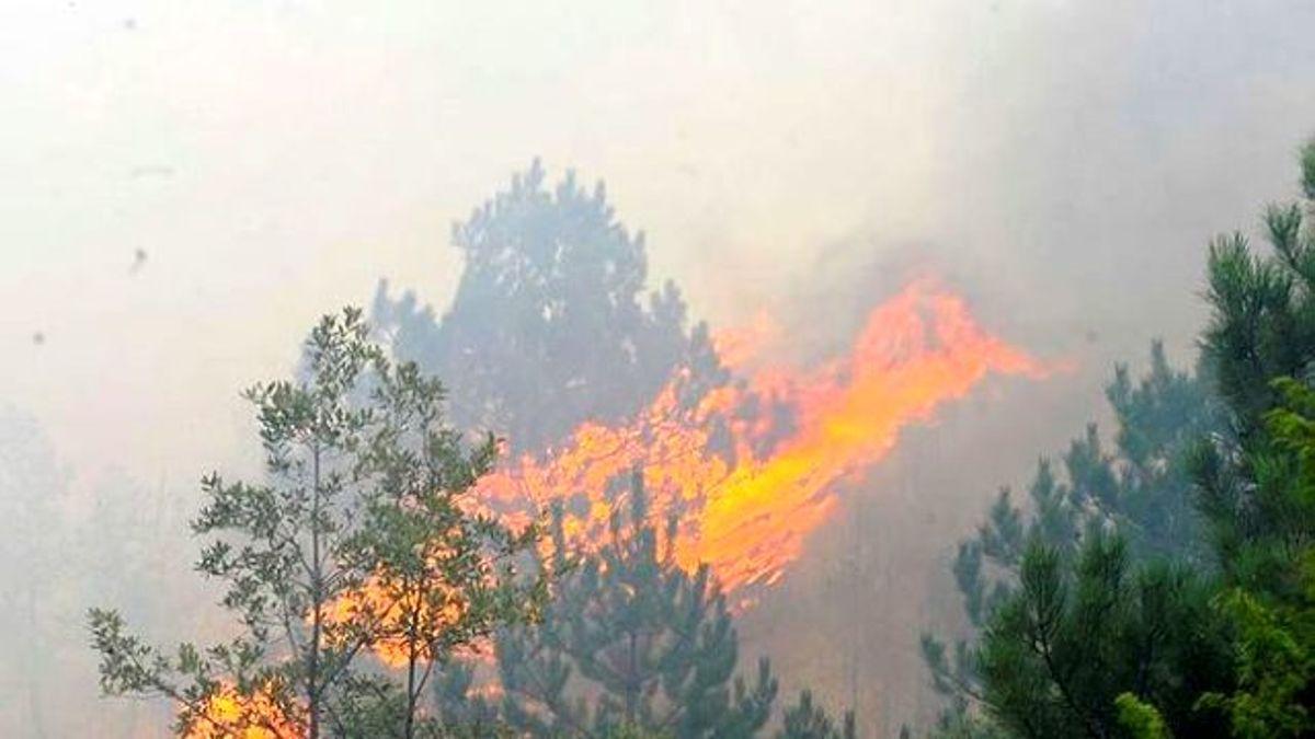 GüncellemeUşak'ta Orman Yangını: 1 Ölü
