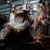 Brezilya'nın Et İhracatı Yüzde 19 Düştü