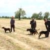 1. Fermalı, Secereli Av Köpekleri Yarışması Antalya'da Yapıldı