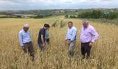 Dolu Çiftçileri Perişan Etti