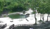 Yavru Fili Kurtarmak İçin Fillerden İnanılmaz Kurtarma Operasyonu