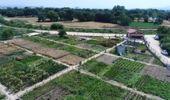 Nilüfer'in Bostanlarında Aromatik Bitki Üretiliyor