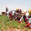 Mevsimlik Tarım İşçilerinin Yevmiyeleri Belirlendi