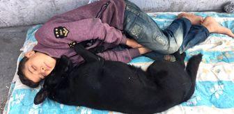 Köpeğine Sarılıp Uyuyan Suriyeli Çocuk: Arkadaşım Gibi Zannediyorum