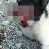 Sosyal Medyada Gözleri Oyulmuş Kedi Paylaşımına Tepki (2)