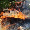 Güncelleme - Kars'ta Orman Yangını