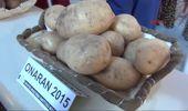 Niğde'de Milli Patateslerin Hasadı Yapıldı