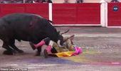Meksika'da Boğa Güreşinde Ağır Yaralanan Matador, Arenaya Dönüp Boğayı Öldürdü