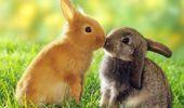 Polonya'da Bakanlık Halka Çağrı Yaptı: Tavşan Gibi Üreyin!