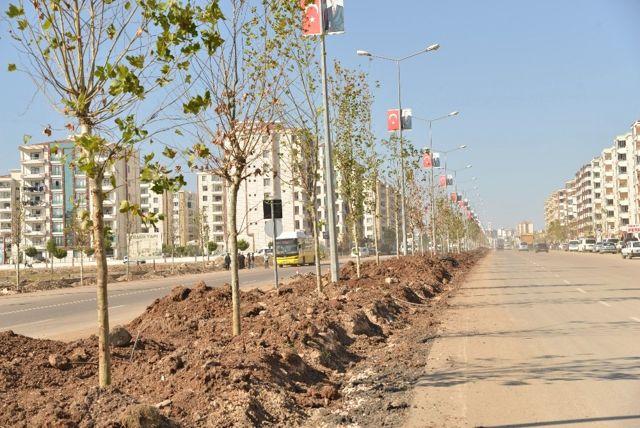 Büyükşehir, Diyarbakır'ı Ağaçlandırıyor