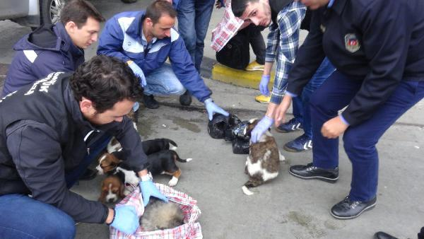 Kapıkule'de Otomobildeki Çantalardan 10 Yavru Köpek Çıktı