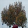 İzmir'de Yağmur