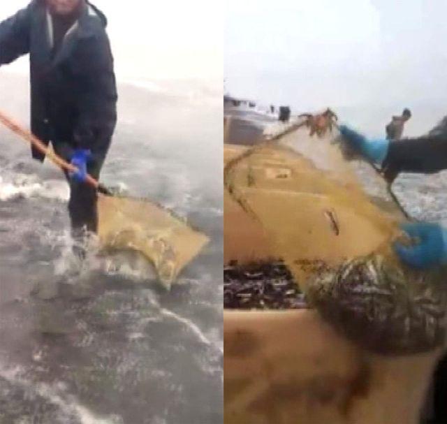 Yanlış Avlanma Nedeniyle Rusya Sahilerine Hamsi Vurdu, Balıkçılar Kovalarla Topladı