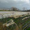 Antalya'da Şiddetli Yağış ve Rüzgar